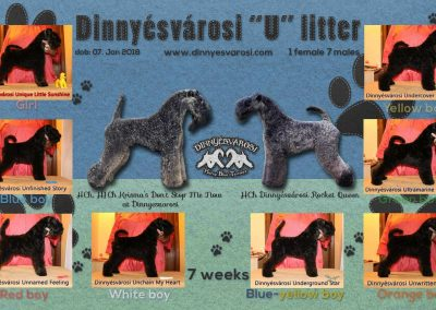 u-litter-10weeks-2-k